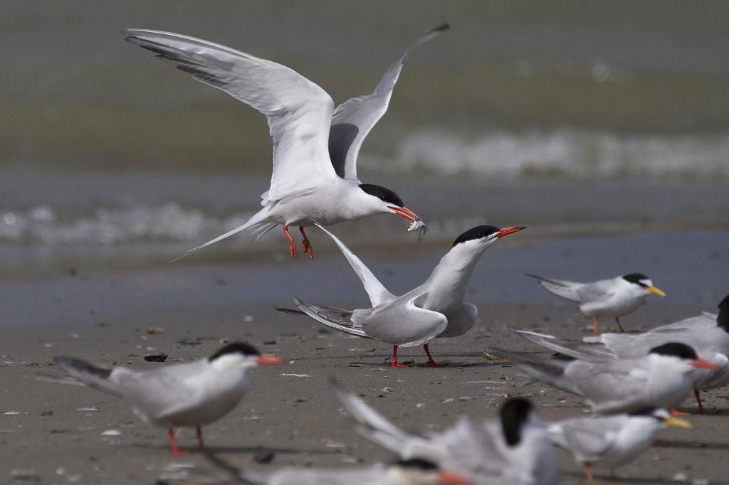 Aves río Segura