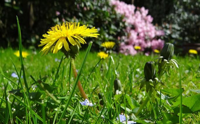 Destacada cómo ahorrar energía en un jardín