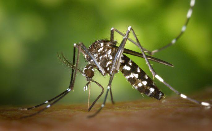Consejos contra mosquitos